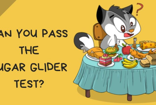 Can You Pass the Sugar Glider Food Test?