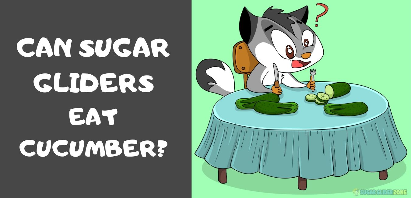 can sugar gliders eat cucumber -