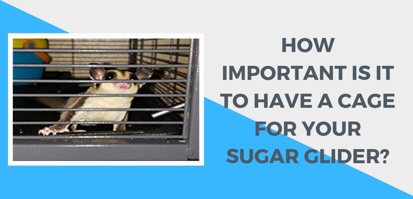 how important is it to have a cage for your sugar glider FI