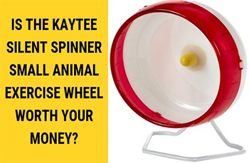 is the kaytee silent spinner small animal exercise wheel worth your money FI