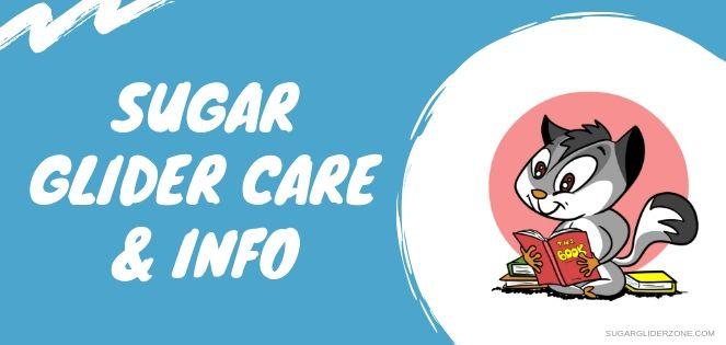 sugar glider care and info fi