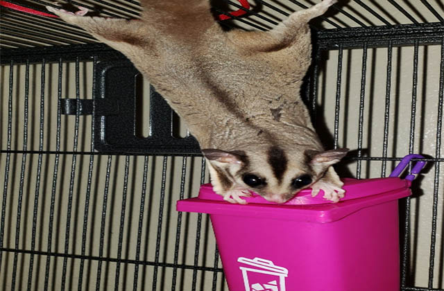 toys for sugar gliders to hang on