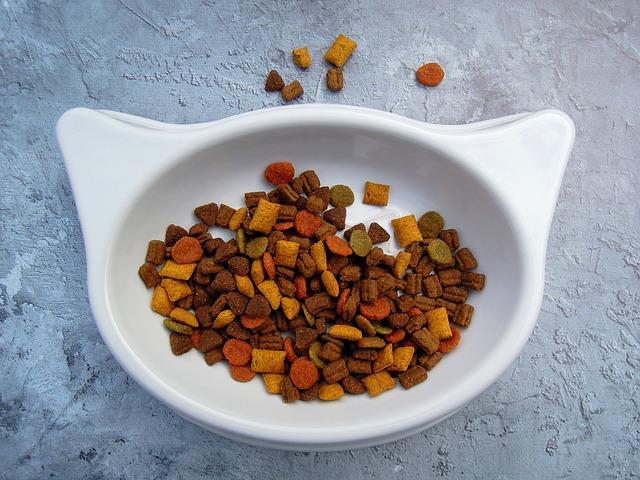 can sugar bears eat cat food
