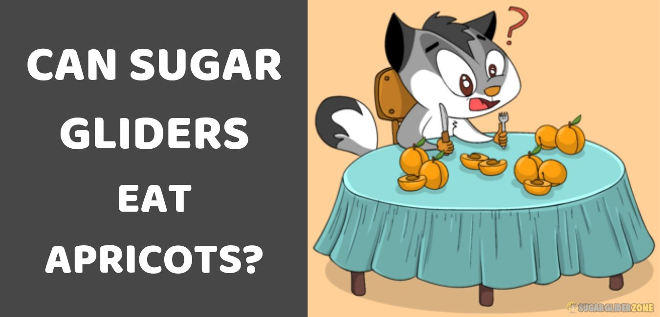 can sugar gliders eat apricots