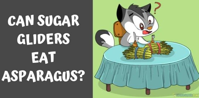 Can Sugar Gliders Eat Asparagus?