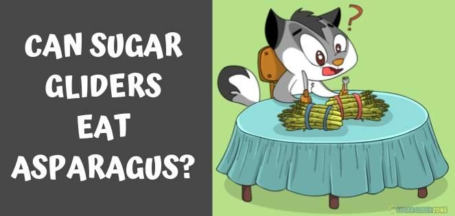 can sugar gliders eat asparagus