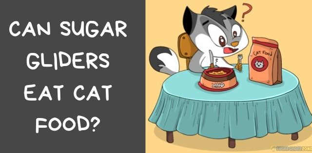 Can Sugar Gliders Eat Cat Food?