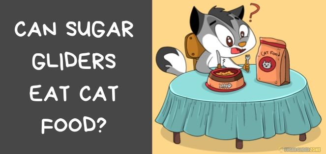 can sugar gliders eat cat food