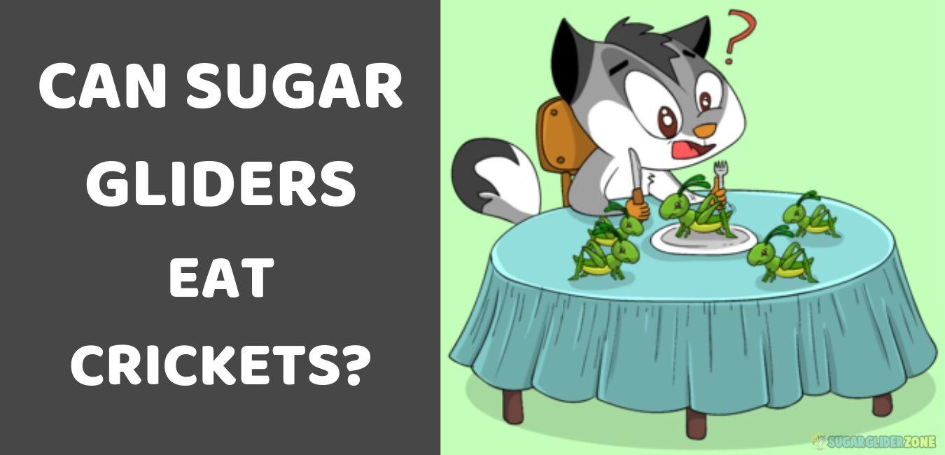 can sugar gliders eat crickets