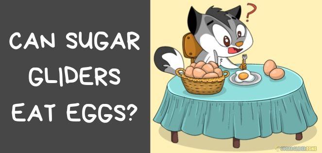 can sugar gliders eat eggs