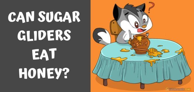 can sugar gliders eat honey