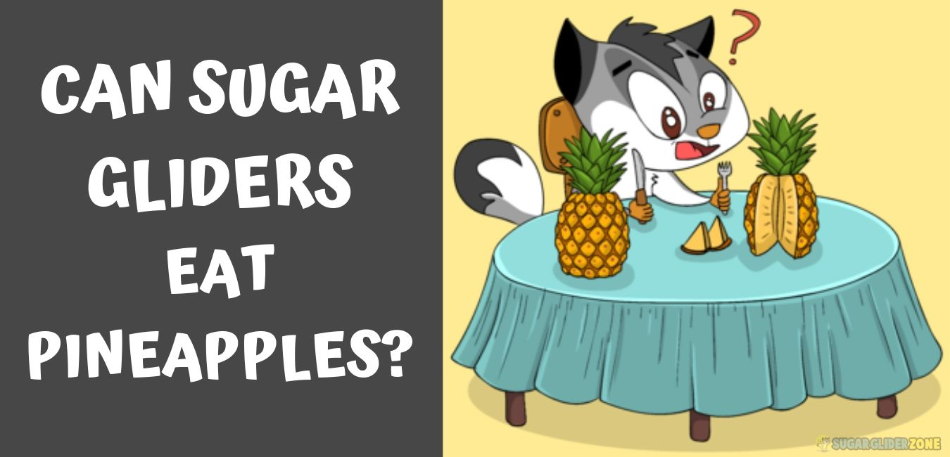 can sugar gliders eat pineapples