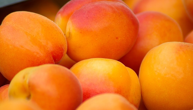 is apricots beneficial for sugar gliders