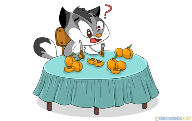 is apricots safe for sugar gliders