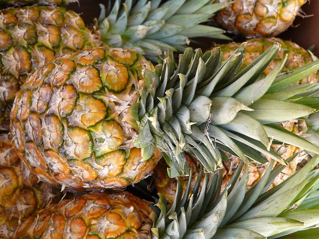 pineapple healthy for sugar gliders
