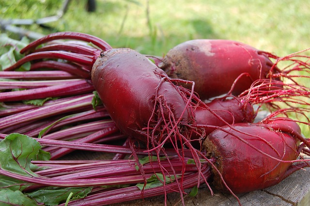 are beets beneficial for sugar gliders