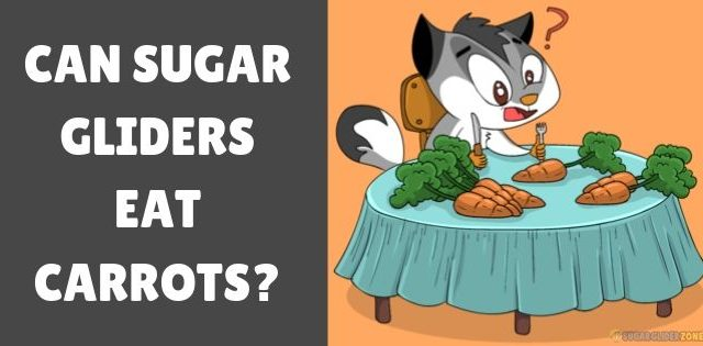 Can Sugar Gliders Eat Carrots?