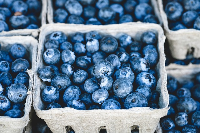 how much blueberries could sugar gliders eat