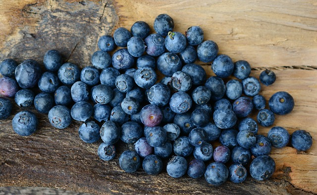 is blueberries healthy for sugar gliders